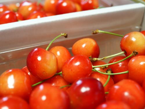 紅い実食べた?_a0279858_19072235.jpg