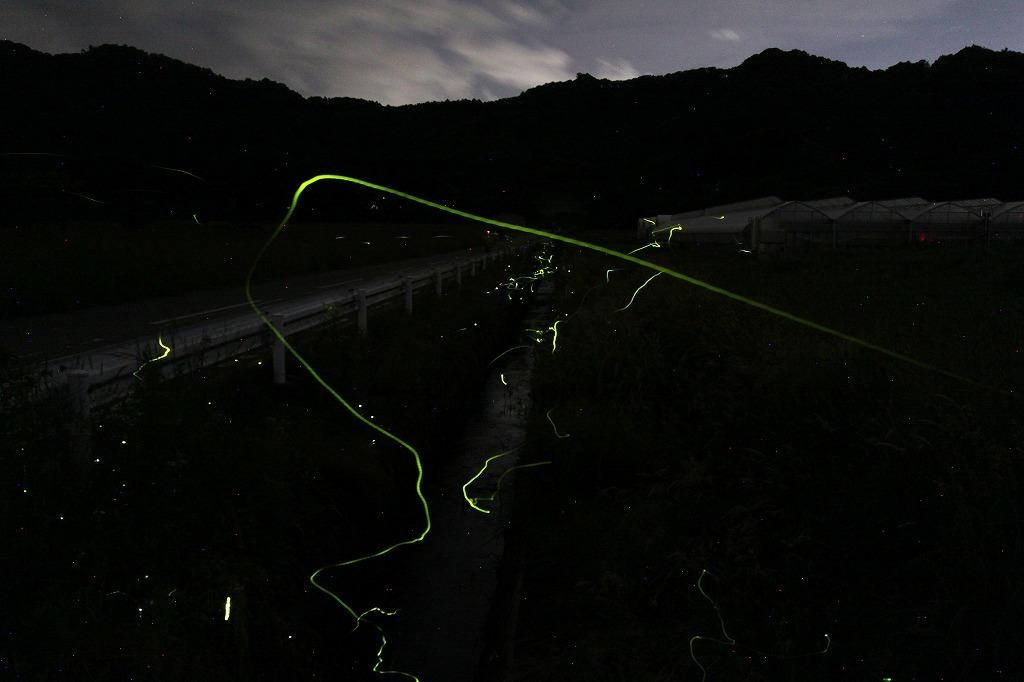 軽井沢の蛍・2020 * 発地のゲンジボタルはピーク、塩沢の蛍めぐりも来月開催予定?_f0236260_20280523.jpg