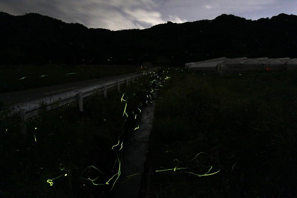 軽井沢の蛍・2020 * 発地のゲンジボタルはピーク、塩沢の蛍めぐりも来月開催予定?_f0236260_20281914.jpg
