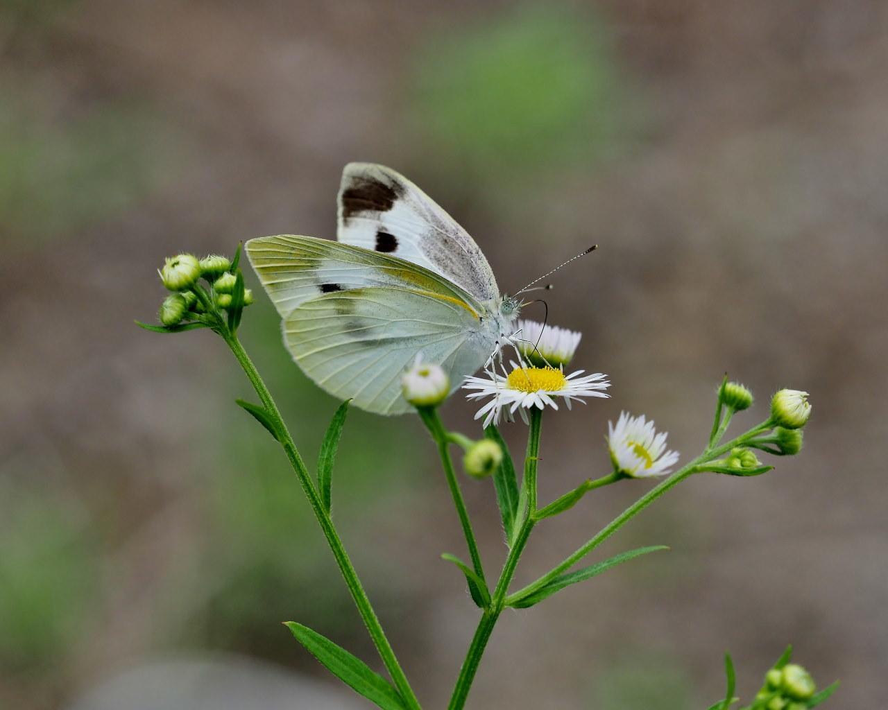 榛名湖畔で避暑がてら おもに虫撮り_c0305565_17301707.jpg