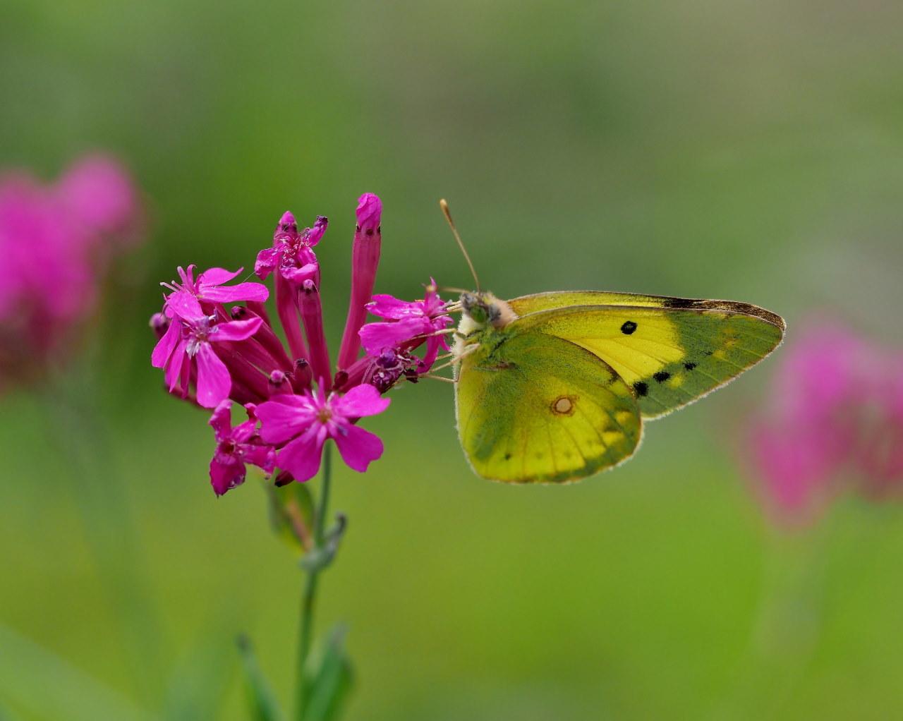 榛名湖畔で避暑がてら おもに虫撮り_c0305565_17305291.jpg