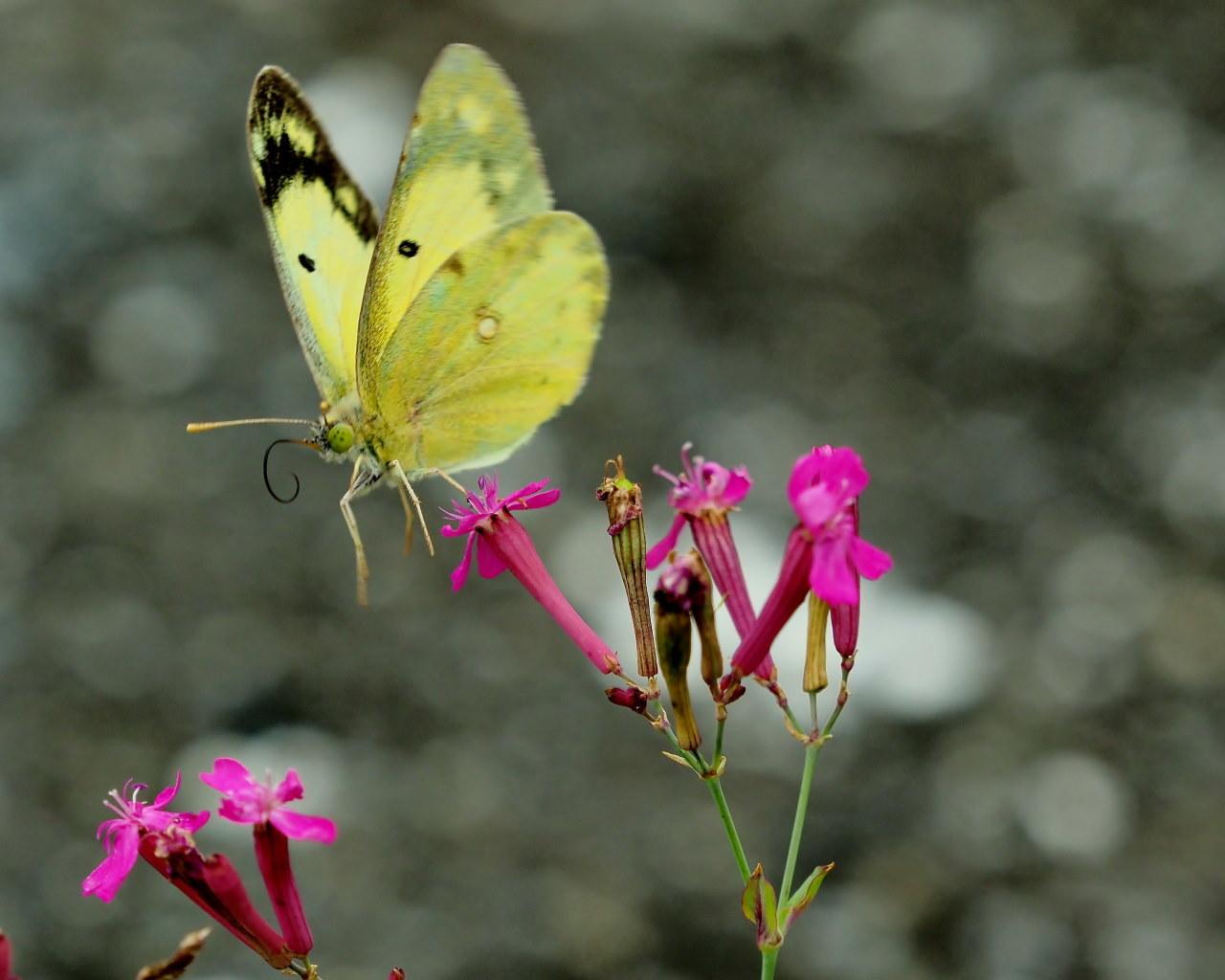 榛名湖畔で避暑がてら おもに虫撮り_c0305565_17310967.jpg