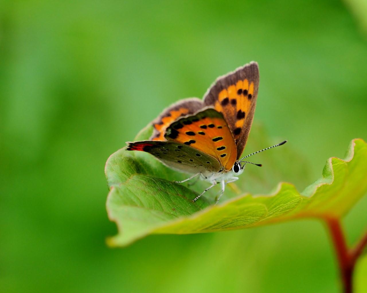 榛名湖畔で避暑がてら おもに虫撮り_c0305565_17314245.jpg