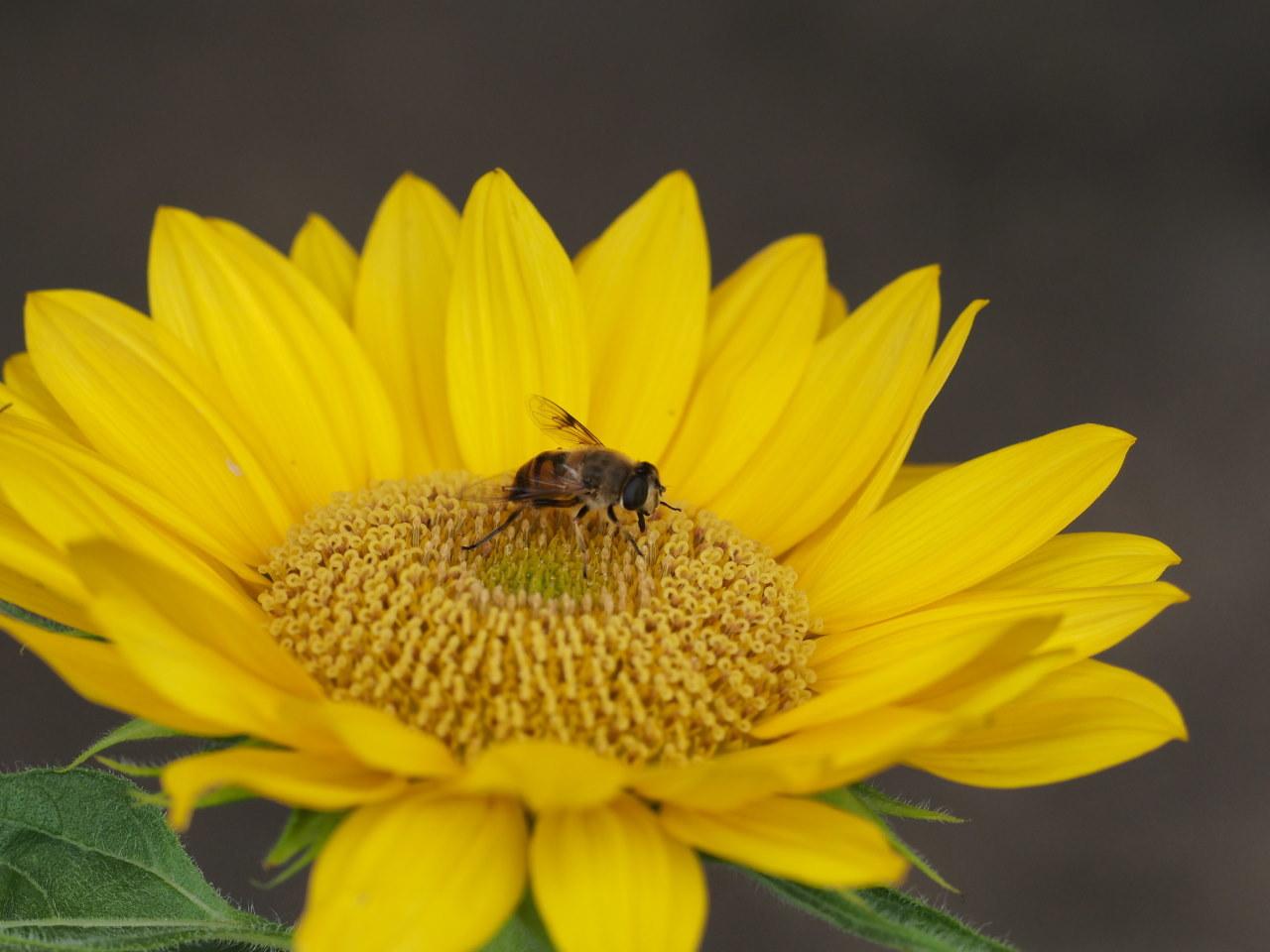 榛名湖畔で避暑がてら おもに虫撮り_c0305565_17333842.jpg