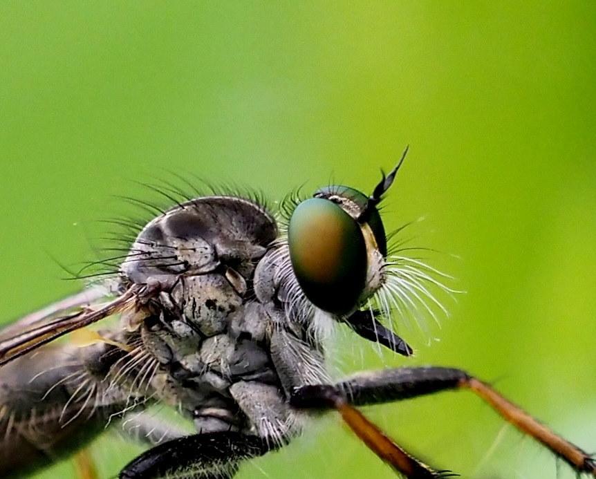 榛名湖畔で避暑がてら おもに虫撮り_c0305565_17340939.jpg
