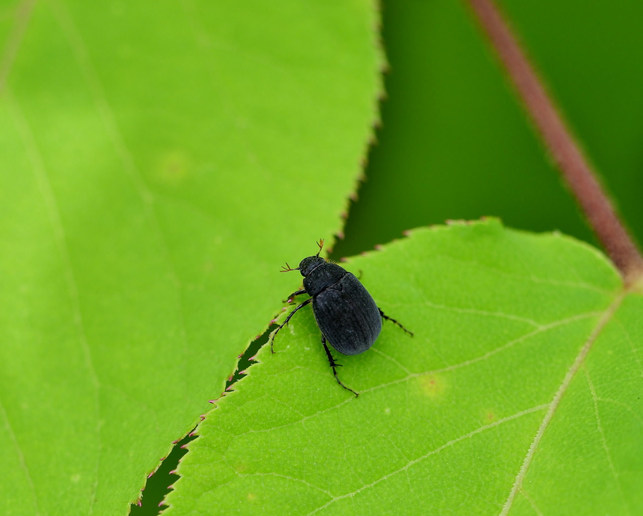 榛名湖畔で避暑がてら おもに虫撮り_c0305565_17345110.jpg