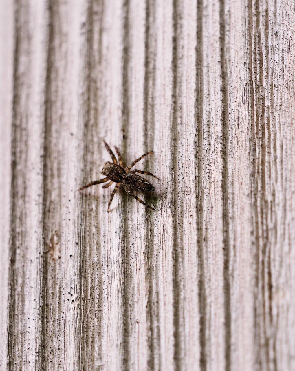 榛名湖畔で避暑がてら おもに虫撮り_c0305565_17363526.jpg