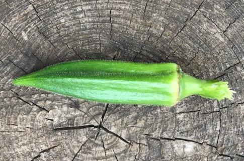 オクラ初収穫、雑草取りで汗まみれ6・27_c0014967_09025236.jpg