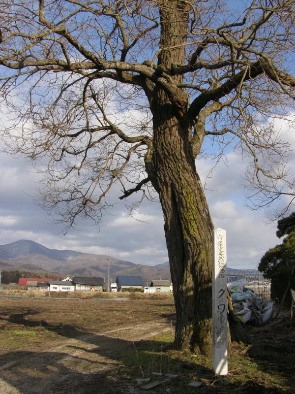 「オシラサマ(桑という墓標)」トイウモノ(其の二)_f0075075_18530794.jpg