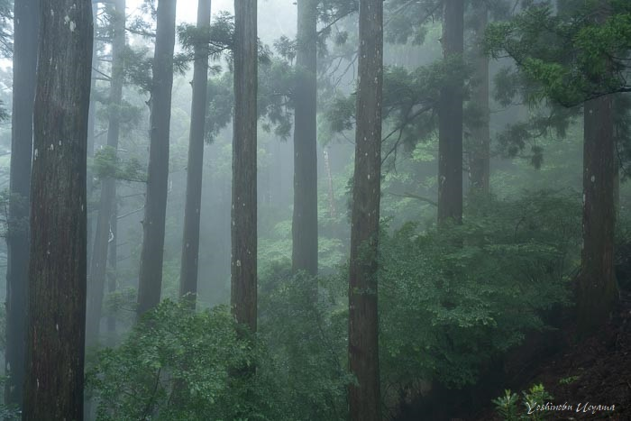 十津川3(玉置山)_e0092186_13285210.jpg