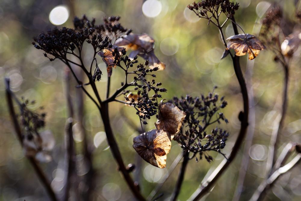 花の盛りに_c0252695_10233094.jpg