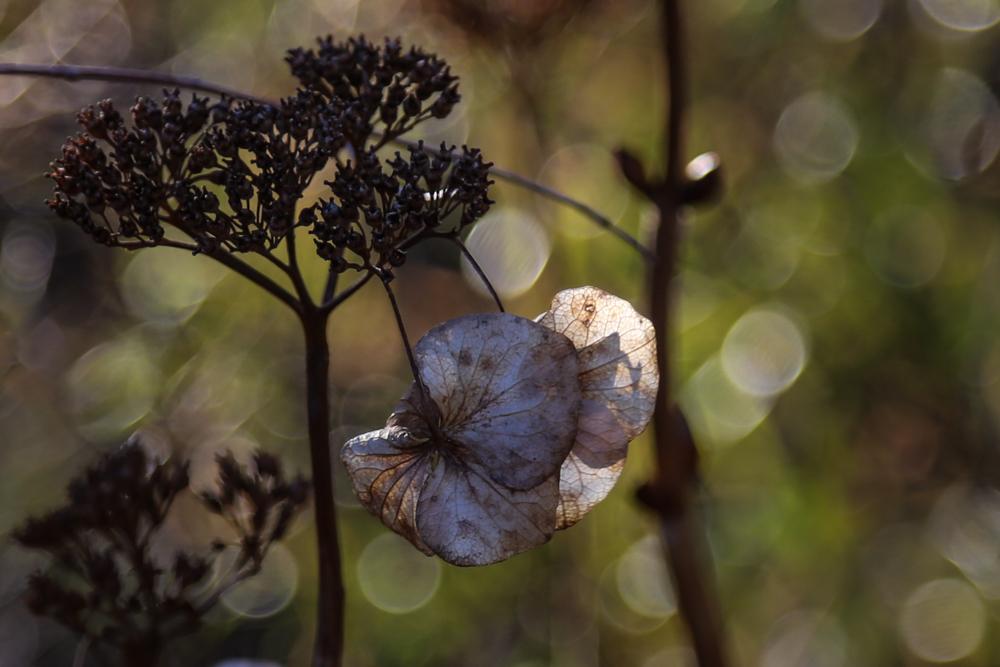 花の盛りに_c0252695_10233340.jpg