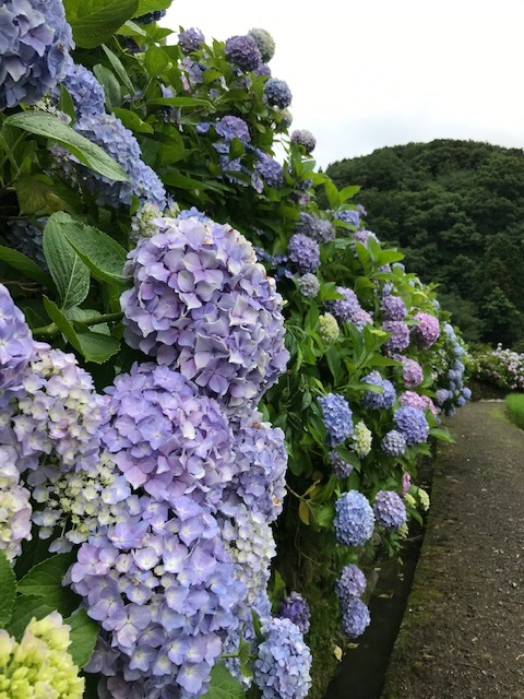 あわじ花山水_f0204295_16130800.jpg