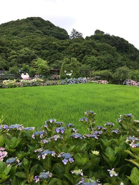 あわじ花山水_f0204295_19030343.jpg