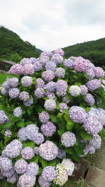 あわじ花山水_f0204295_19051341.jpg