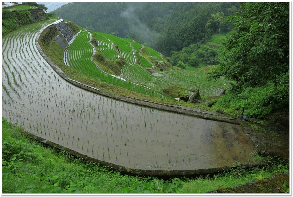 内子町 雨の泉谷棚田_a0057905_15571304.jpg