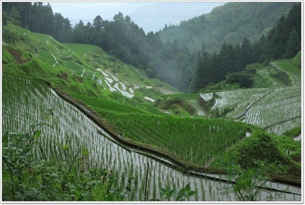 内子町 雨の泉谷棚田_a0057905_15581348.jpg