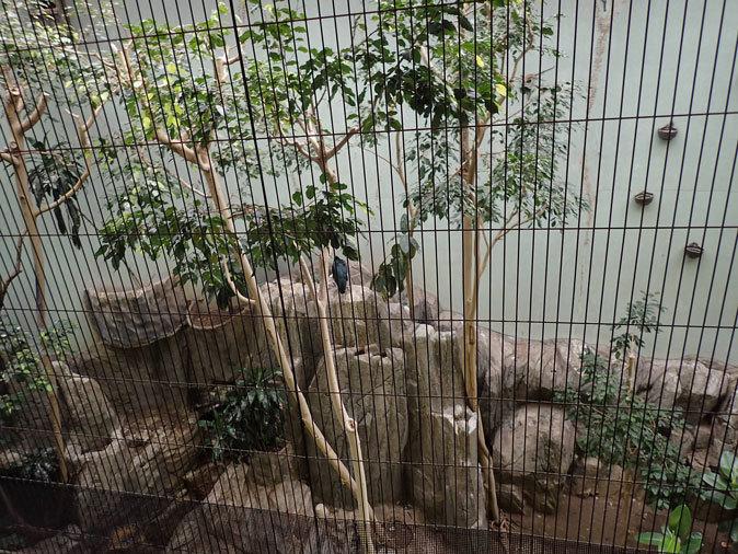 上野動物園バードハウス大図鑑⑨~2F:国内唯一のハゲトキとアフリカの美しい鳥たち_b0355317_21011672.jpg
