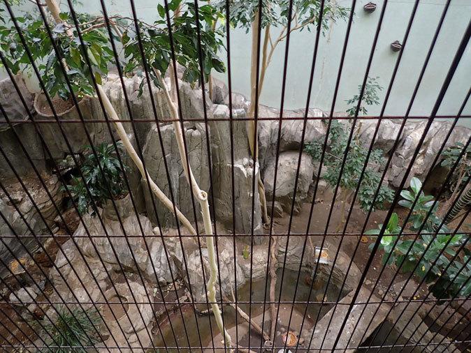 上野動物園バードハウス大図鑑⑨~2F:国内唯一のハゲトキとアフリカの美しい鳥たち_b0355317_21024591.jpg