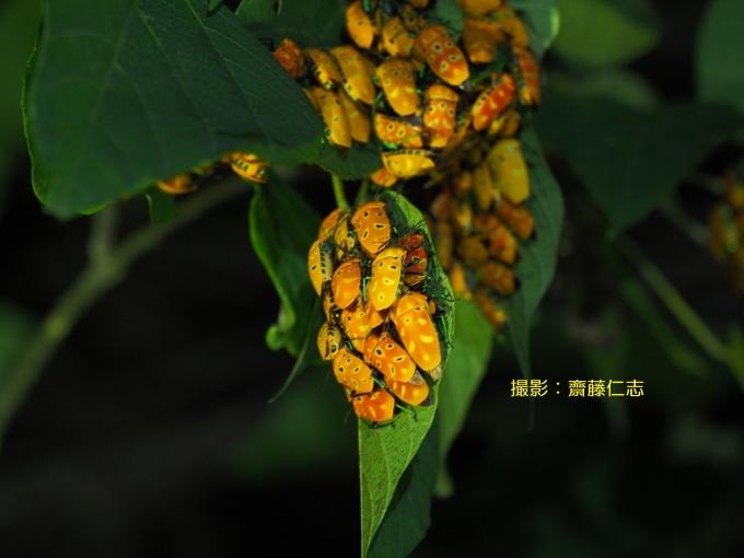 2020年度 第一回くんじゃん山学校! 夜の森を探検!_f0121321_09564105.jpg