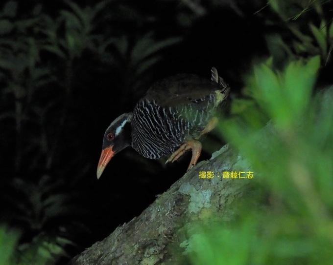 2020年度 第一回くんじゃん山学校! 夜の森を探検!_f0121321_10385869.jpg