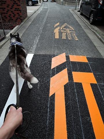 散歩屋日誌【番外編】_c0062832_15582272.jpg