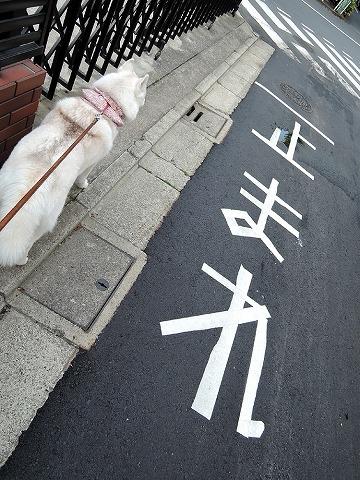 散歩屋日誌【番外編】_c0062832_15582299.jpg