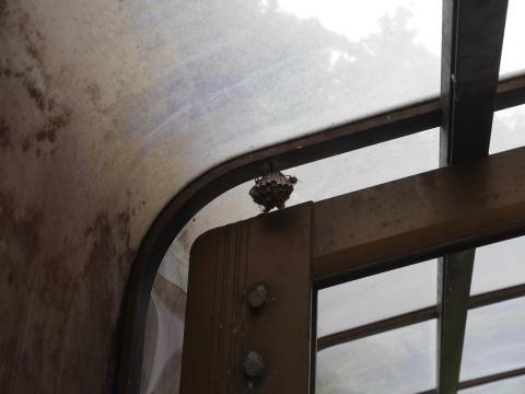 ガレージのアシナガバチの巣、慎重に駆除6・29_c0014967_18425344.jpg