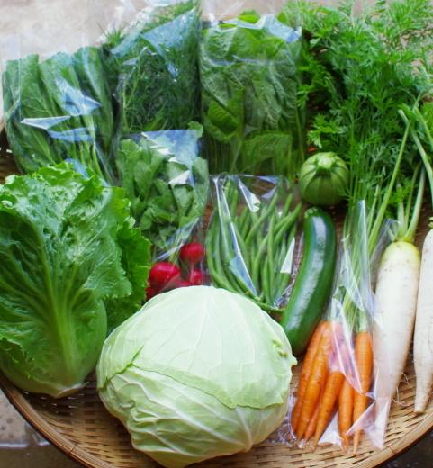 今週の野菜セット(6/30~7/4着)_c0110869_13024267.jpg
