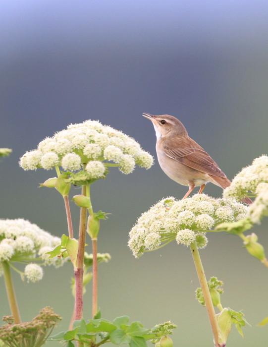 道北の花と野鳥_c0229170_16161069.jpg