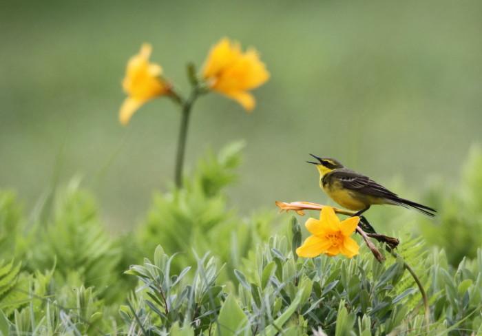 道北の花と野鳥_c0229170_16162200.jpg