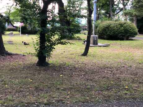 神社で出会った猫たち_e0355177_12021304.jpg