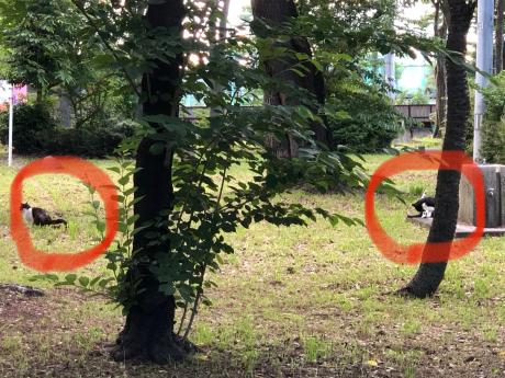 神社で出会った猫たち_e0355177_12021546.jpg