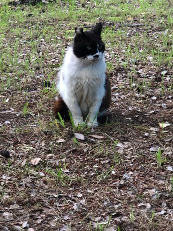 神社で出会った猫たち_e0355177_12024884.jpg