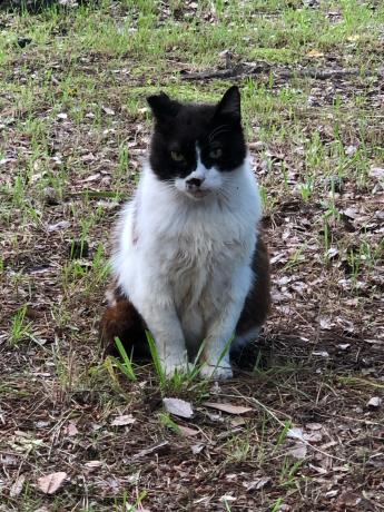 神社で出会った猫たち_e0355177_12024967.jpg
