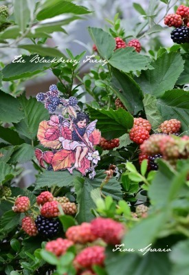 The Blackberry Fairy_a0252678_08503005.jpg
