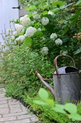 The Blackberry Fairy_a0252678_08515995.jpg