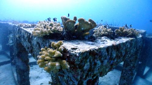 ファンダイブでアンダマン海を満喫(^^)_f0144385_15254282.jpg