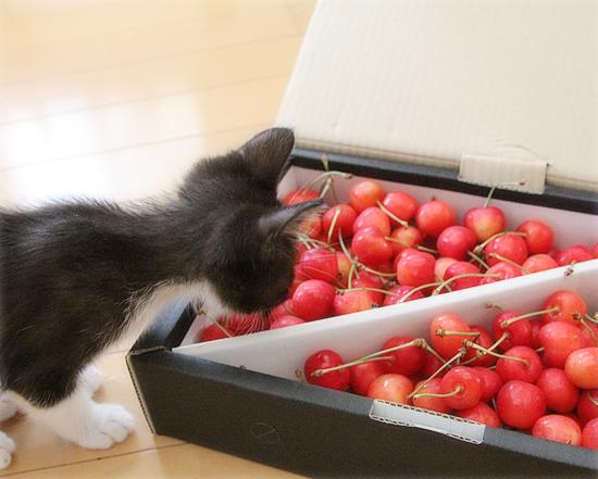子猫と赤い宝石_a0389088_05494225.jpg