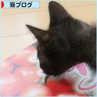 子猫と赤い宝石_a0389088_05494333.jpg
