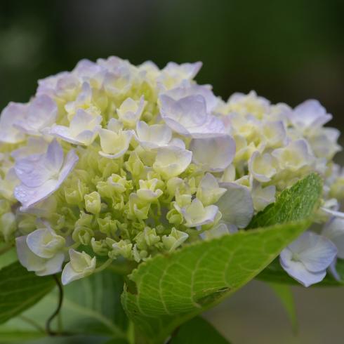 初夏の花 04_f0099102_11012432.jpg