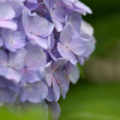 初夏の花 04_f0099102_11014373.jpg
