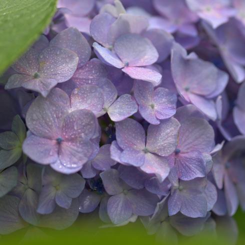 初夏の花 04_f0099102_11014941.jpg