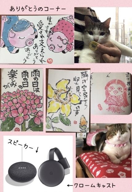 らんこちゃん家族猫_f0375804_07575128.jpg