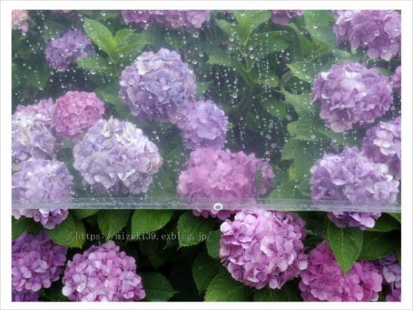 雨模様_c0091505_12552087.jpg
