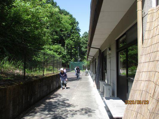 6/29 散歩_a0154110_08562521.jpg