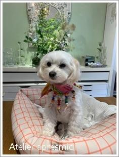 看板犬🎶☆彡_c0229721_09521674.jpg