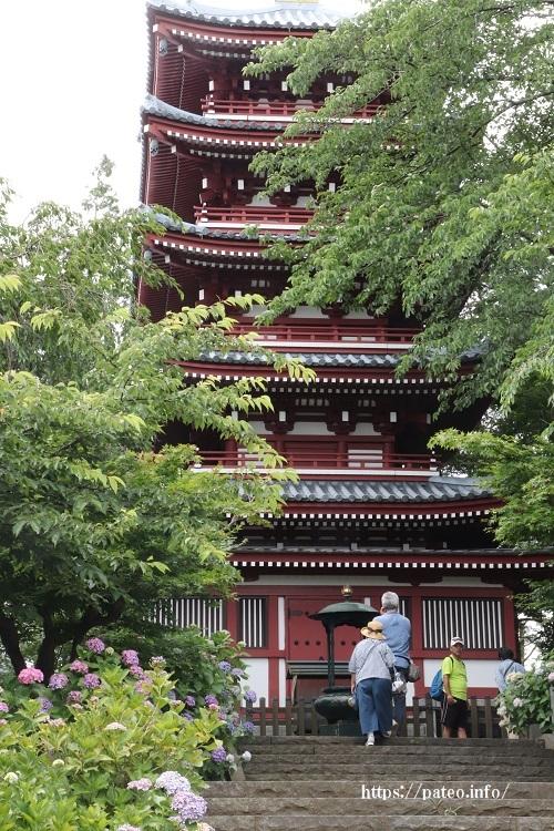 松戸市本土寺の華麗な「アジサイ」か「五重塔」か?_a0214329_17025784.jpg
