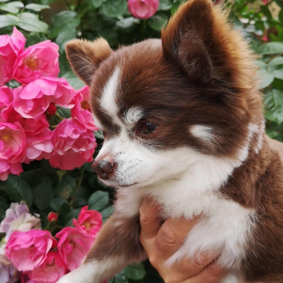 庭の薔薇の香を楽しむゆず隊長_d0211229_23483936.jpg