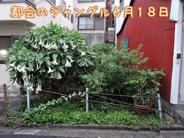 月曜エア散歩_c0062832_16103615.jpg